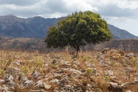 Tree in the castle of Antimachia village in Kos island Greece