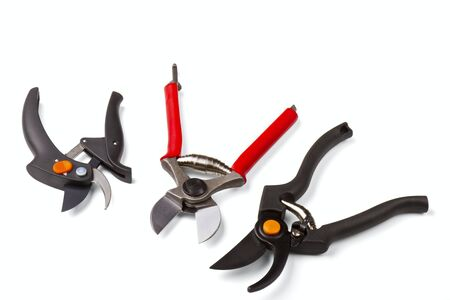 stainles steel: garden secateurs isolated on a white background
