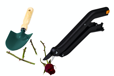 stainles steel: garden secateurs isolated on a white  Stock Photo