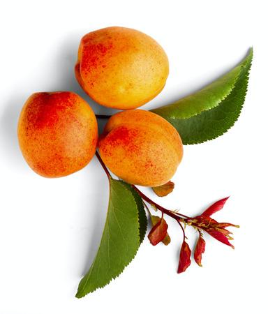 seasonic: apricot fruits isolated on white background Stock Photo