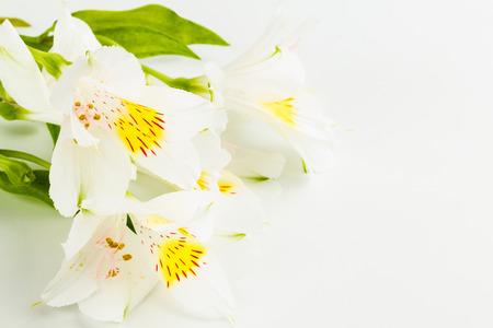 wonderfull: lirio maravilloso en el fondo blanco Foto de archivo