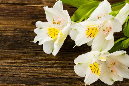 wonderfull: wonderfull lily on wooden background