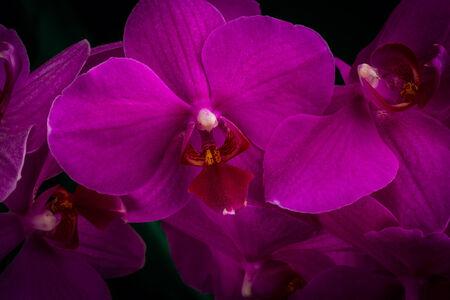 wonderfull: wonderfull red orchid on dark background