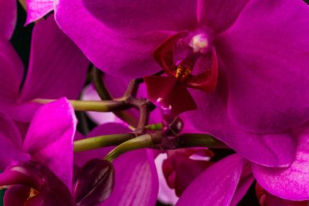 wonderfull: orqu�dea roja maravillosa en el fondo oscuro Foto de archivo