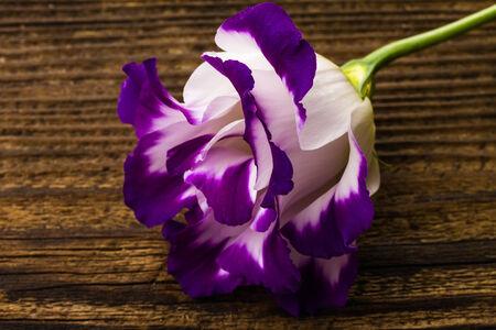 wonderfull: wonderfull white-purple lily on wooden background