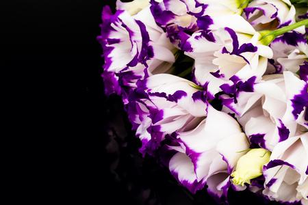 wonderfull: maravilloso lirio blanco y morado sobre fondo negro