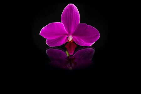 wonderfull: fresh singl beautiful pink orchid on mirror background