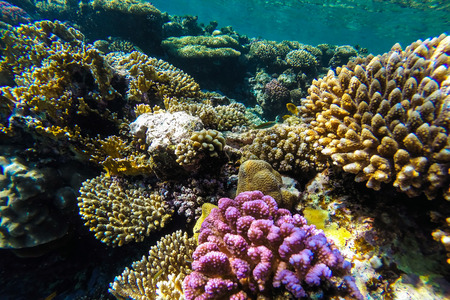 red sea coral reef with hard corals, fishes and sunny sky shining through clean water Фото со стока - 39567941