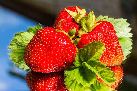 mirror: Fresh strawberry on mirror