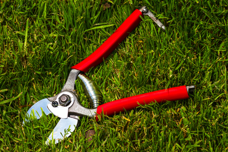 stainles steel: professional garden secateurs on a grass background