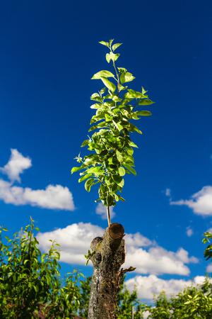 seasonic: Revived apple tree on sky background