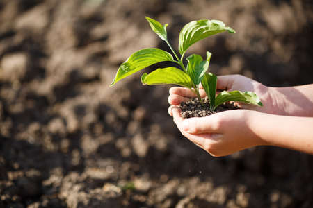 Young green sprout with earth on hands, the concept of a green planet, we will preserve nature Reklamní fotografie