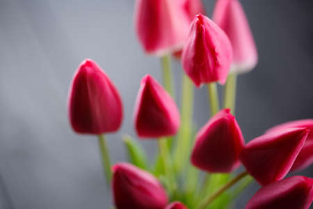 pink tulips on a black wooden table, a festive bouquet close-up