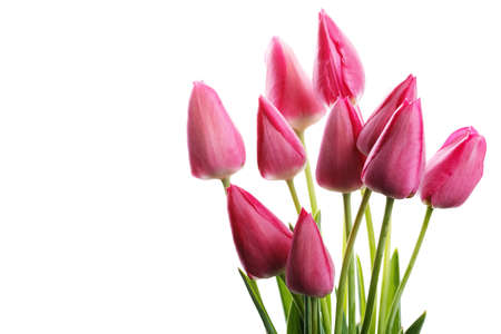 pink tulips on an isolated white background, festive bouquet Banco de Imagens