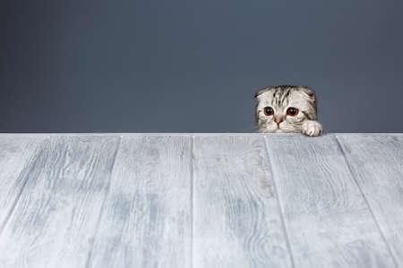 cat looking over gray wooden background Stock fotó
