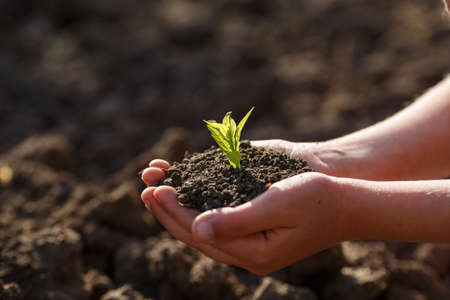 Young green sprout with earth on hands, the concept of a green planet, we will preserve nature Banco de Imagens