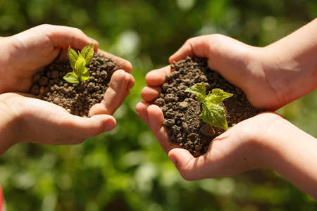 Young green sprout with earth on hands, the concept of a green planet, we will preserve nature