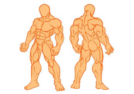 modelo de cuerpo humano musculoso