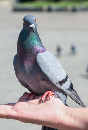 Pigeon on hand photo