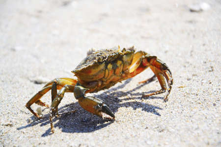 insensitive: Crab on white