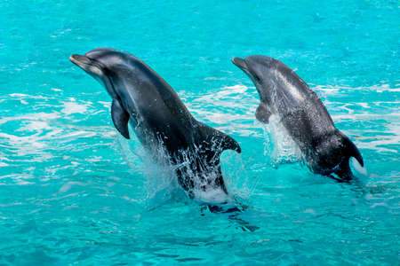 Dolphins jumping out of sea water