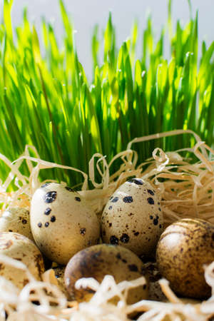 Happy easter postcard. Row of easter eggs quail on the green fresh grass and hay. Stock Photo
