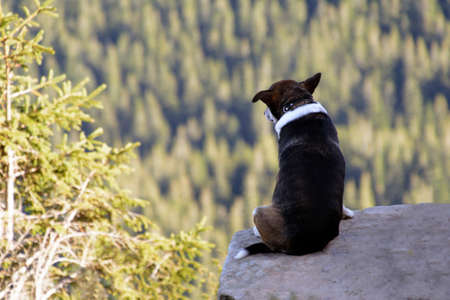 Alone dog sitting on rock against the backdrop of an incredible mountain landscape