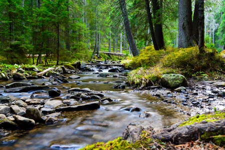 Mountain river flowing through the green forest. Stream in the wood. Stock Photo