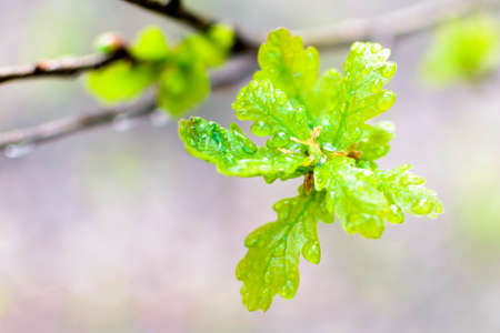 The beautiful spring tree branch with rain drops, macro background