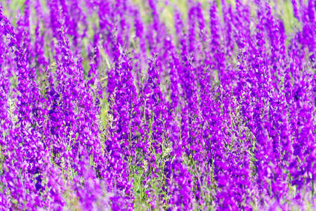 purple background with small flowers. Selective focus Stock Photo