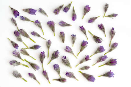 Flower pattern of purple spring wildflowers. Top view. Floral abstract background. Flower concept. Stock Photo