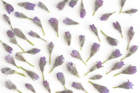 Flower pattern of purple spring wildflowers. Top view. Floral abstract background. Flower concept. Stock Photo - 122263354