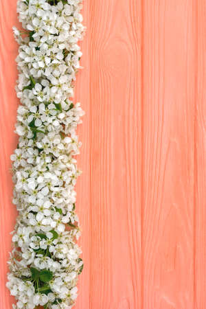 Spring wooden background, fresh blooming tree flower on color background. Stock Photo