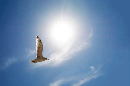 Gaviota volando por encima de las nubes contra el sol brillante en verano
