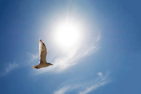 Seagull Flying above clouds against bright sun on summer day