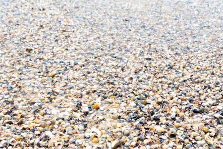 Natural wet sand and sea shells background Standard-Bild