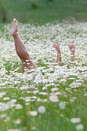 Girl lying on back in chamomile field  Legs and arms sticking up from chamomile field
