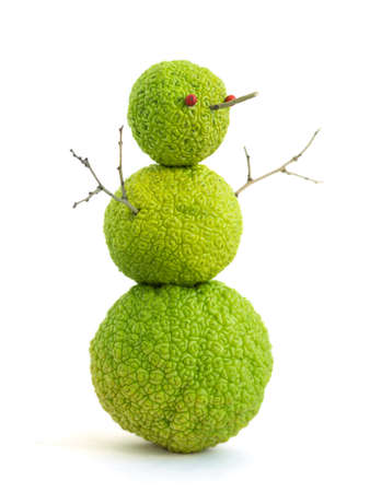 peculiar: Subtropical snowman. Fruits of maclura pomifera stacked on each other, that resembles a snowman