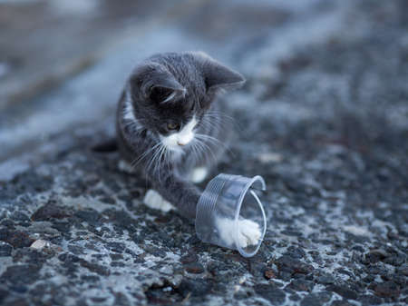 One homeless cute kitten. Kitten on playing with part of plastic cup on concrete pier