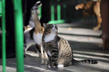 Homeless animals. Homeless cats beg for food in the catering Banque d'images - 126857214