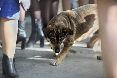 Stray animal. Homeless dog looking for food on the street among human legs Banque d'images - 126857216