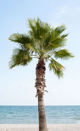 one palm against the sea on the beach on a sunny day photo