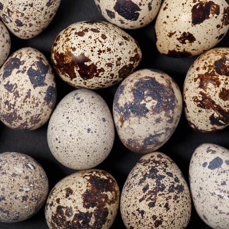 quail egg: Quail Egg Background