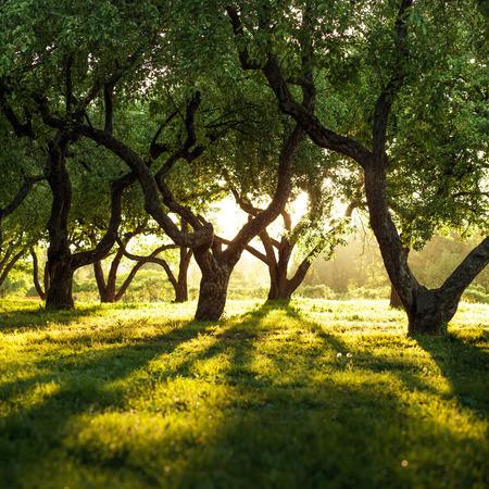 magic dark forest Фото со стока