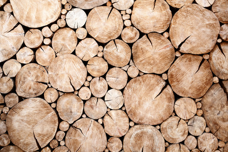 tree stumps background Trees cut section Wood texture of cutted tree trunk Stockfoto