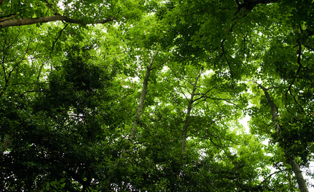 magnificence: green forest,forest trees. nature green wood sunlight backgrounds