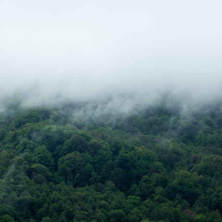 fog: Fog covering the mountain forests