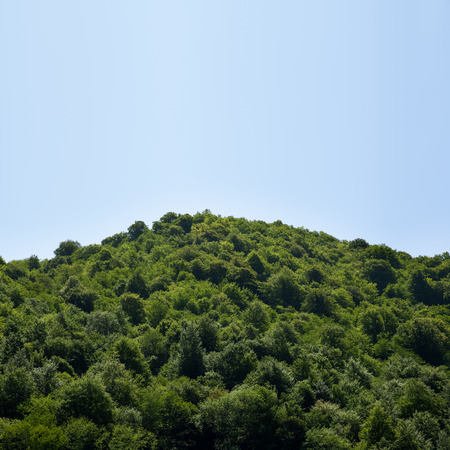 clump: tops of a clump of trees on blue sky background