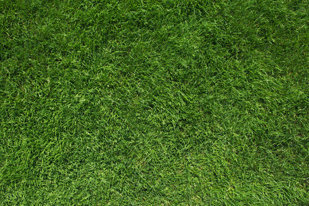 Texture of green grass top view green lawn