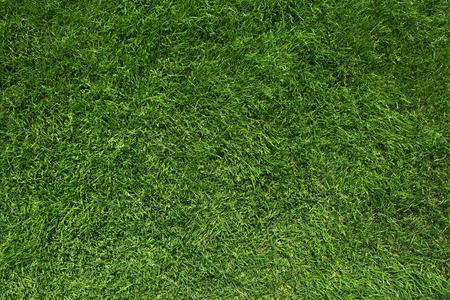 Texture di erba verde di vista superiore prato verde Archivio Fotografico